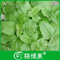 柠檬薄荷 香草种子花卉花草植物种子 阳台盆栽 精包装 满28元包邮 价格:1.90