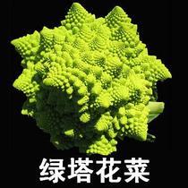 绿塔花椰菜 宝塔花菜 绿塔花菜种子 新型蔬菜高营养 高观赏价值 价格:2.80