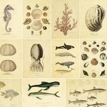 韩国文具 自然生物学 の 海洋生物 明信片组 16张入 价格:7.50