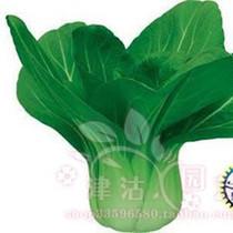 阳台种菜  蔬菜种子 油菜种子(上海青菜种子) 阳台种植 价格:3.00