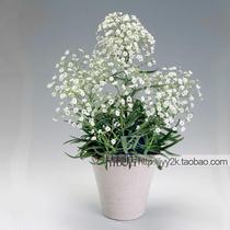 满天星种子 白色群星 丝石竹 略有微香 耐荫耐寒 花种子 花卉种子 价格:2.00