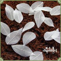 天然金刚树叶叶脉标本拍摄道具叶脉画书签手工diy创意材料耗材 价格:0.30