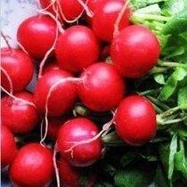 水果萝卜种子 红樱桃萝卜 植物种子 阳台盆栽 盆栽 3元约5克 价格:3.00