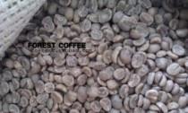 肯尼亚阿拉比卡精品庄园豆咖啡生豆Kenya AA蜜桃太妃糖100g可批发 价格:14.50