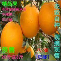 预售正宗赣南脐橙 有机新鲜水果甜橙子 信丰脐橙 精品果20斤包邮 价格:78.00