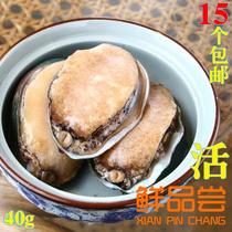 特价 AAA级高档大连 海鲜 新 鲜 活 中小 鲍鱼 12头 40g/只 批发 价格:7.90