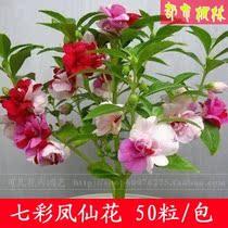 茶花凤仙 花卉种子【七彩凤仙花种子50粒】四季可播 价格:1.50