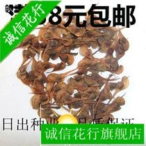 包邮领春木种子木桃种子绿化林木行道树种子量大批发优惠满 价格:76.00