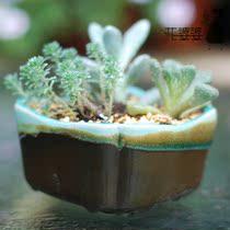 花婆婆 日式出口 陶瓷花盆 裂纹釉
