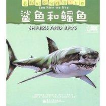 全新正版看我们如何生活(上卷)鲨鱼和鳐鱼(全彩)/(英)布鲁克斯 价格:6.30