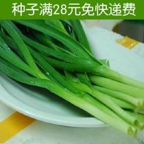 趣植园艺阳台种菜家庭 青蒜种子 简单易种 可结蒜头 蒜苗 约40粒 价格:2.00