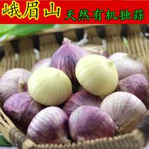 新鲜 四川峨眉山特产紫皮大蒜独蒜 批发有机独头大蒜200g入药防癌 价格:7.80
