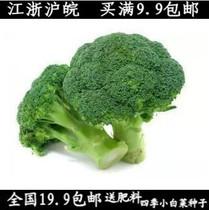 花仙子原装蔬菜种子西兰花种子 50粒 营养丰富 60天可收获 价格:2.00