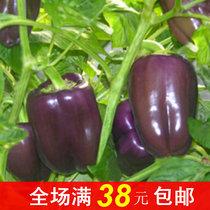 秒杀彩包蔬菜种子 辣椒种子 线椒 尖椒 五彩观赏椒 阳台盆栽植物 价格:1.60