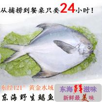 东经121水产 东海野生大鲳鱼 台州特产海鲜 新鲜鲳鱼 6~8两一条 价格:68.00