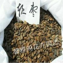 出售花卉苗木种子【软枣】种子 具有抗癌减缓皮肤衰老 45元斤 价格:43.20