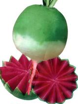 心里美萝卜种子 北京杂交满堂红萝卜种子批发  2.9元 10g 价格:2.90