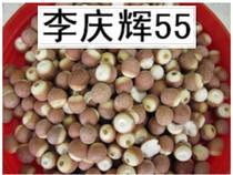 纯天然野生芡实粉250g半斤健脾益肾 固涩精气 价格:18.00