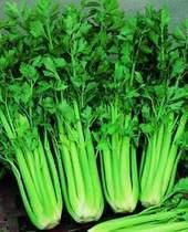 【彩包1500粒】阳台盆栽/蔬菜/芹菜种子-美国西芹种子 满28元包邮 价格:1.80