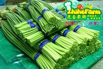 志合农场 无公害新鲜蔬菜自家农场配送 世博供应商 蒜苗蒜苔 价格:10.80
