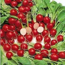 出售蔬菜种子 樱桃红 水萝卜种子 1个月可吃C018 价格:1.80