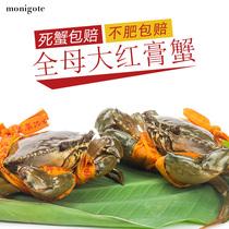 三门青蟹膏蟹全母大红膏蟹满黄品质野生青蟹海鲜鲜活包邮monigote