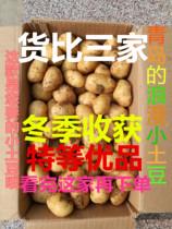山东新鲜迷你小土豆包邮农家马铃薯火锅油炸洋芋(乒乓球大小)