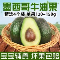墨西哥进口牛油果鳄梨油梨新鲜水果精选精品一级果4个装 宝宝辅食