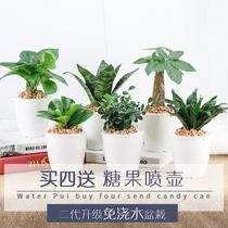 发财树绿萝办公室盆栽虎皮兰栀子花室内盆栽文竹绿植花卉水培植物