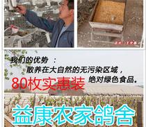 特价促销鸽子蛋新鲜农家土特产80枚装包邮五谷杂粮喂养绿色食品
