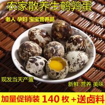 农家散养新鲜生鹌鹑蛋当天鸟蛋无添加宝宝孕妇辅食品140枚包邮