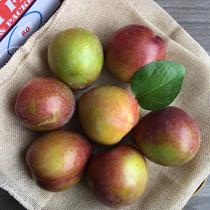 澳大利亚进口珠宝李子2斤装新鲜布林澳洲李子水果特价顺丰包邮