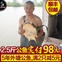 2.5斤公甲鱼活体免邮生鲜活生态中华老鳖野外放养团鱼无公害水鱼