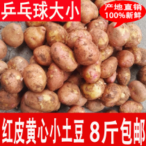 8斤 云南农家自种新鲜土豆 迷你小土豆 马铃薯 非转基因洋芋包邮