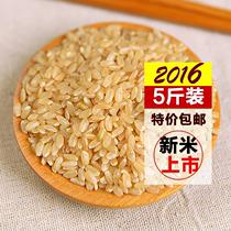 糙米 东北糙米新米玄米农家发芽米胚芽米粗粮五谷杂粮5斤装包邮