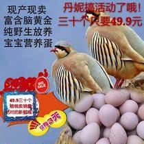 鹧鸪蛋飞龙蛋野鸽子蛋土特产散养杂粮喂养宝宝孕妇辅食包邮30装