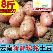 云南新鲜小土豆 农家现挖非转基因土豆洋芋红皮黄心 8斤包邮