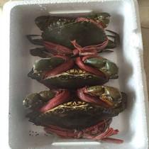 台州特产自家纯天然喂养金清青蟹2斤装海鲜鲜活水产海蟹现货包邮