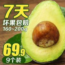 【猪玛水果】墨西哥牛油果 9个装进口新鲜水果酪鳄梨包邮