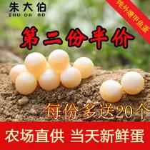宝宝辅食正宗农家放养营养新鲜甲鱼蛋食用土鳖蛋老鳖蛋天然王八蛋