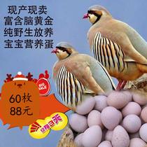 鹧鸪蛋飞龙蛋野鸽子蛋土特产散养杂粮喂养宝宝孕妇辅食包邮60装