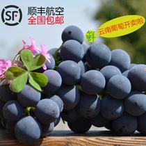云南新鲜水果无籽夏黑巨峰葡萄红提黑加仑黑提提子3斤顺丰航空