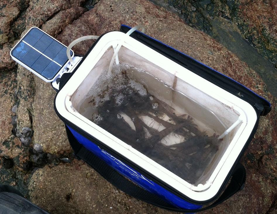 ... Oxygenator Air Pump Oxygen Pool fishpond fish tank pet fishing eBay